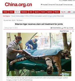 China.org